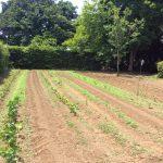 「農地転用、原則可能に」に期待